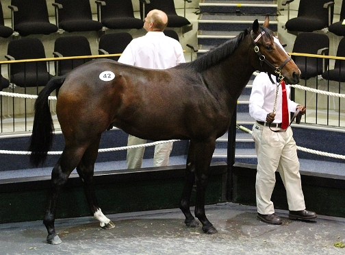What a looker! The Silvano colt - #42 - day 1 top seller